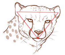 チーターの顔は横長逆三角形