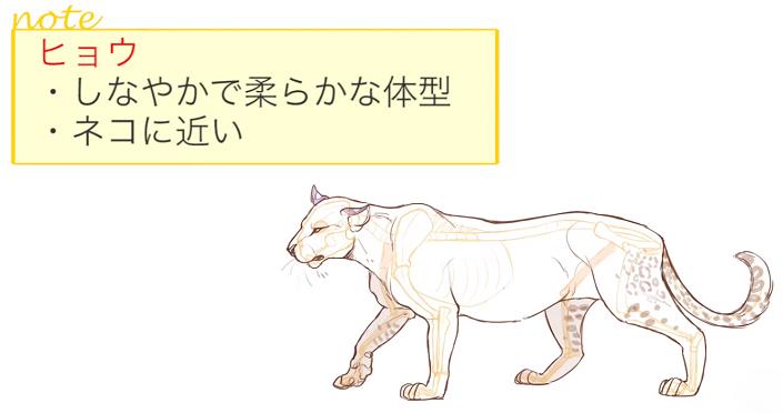 ヒョウの体型