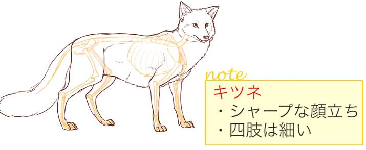 キツネの体型の特徴