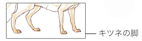 コヨーテの脚は太い
