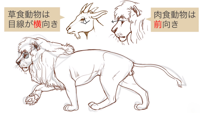 草食動物と肉食動物の特徴