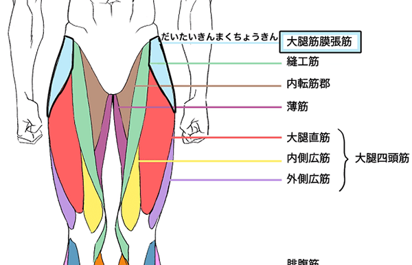 下半身の筋肉の名称