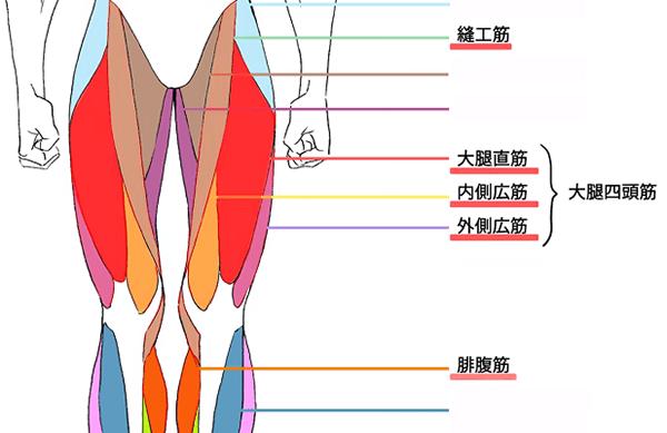 縫工筋や大腿直筋
