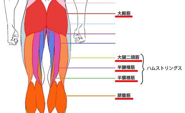 意識すべき筋肉の名称