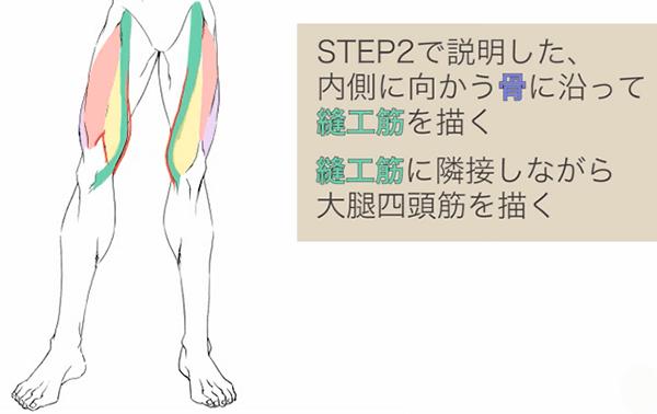 縫工筋と大腿四頭筋を描く