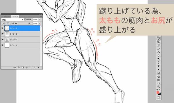 お尻の筋肉を描き加える