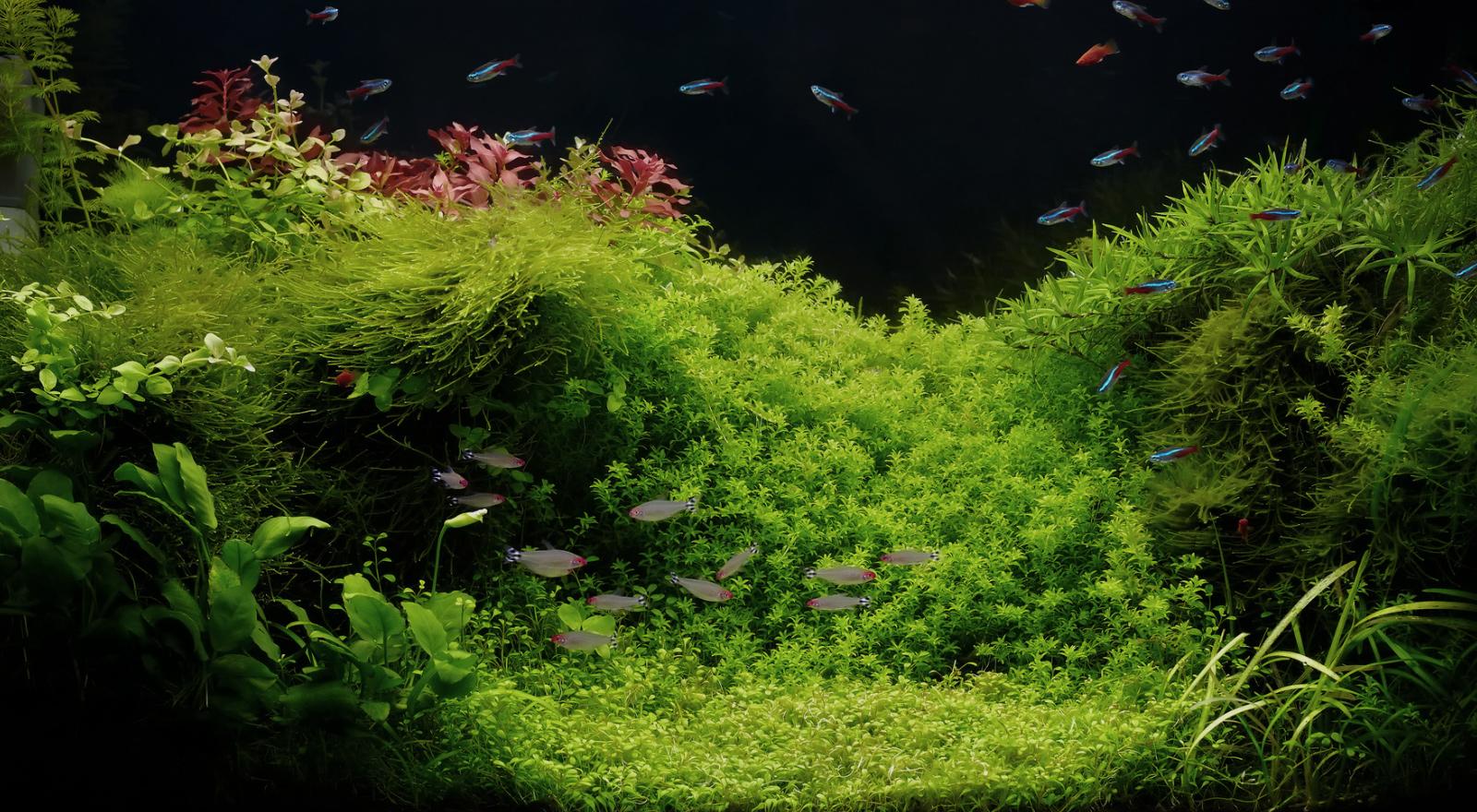 植物のある空間・暮らしをご提案