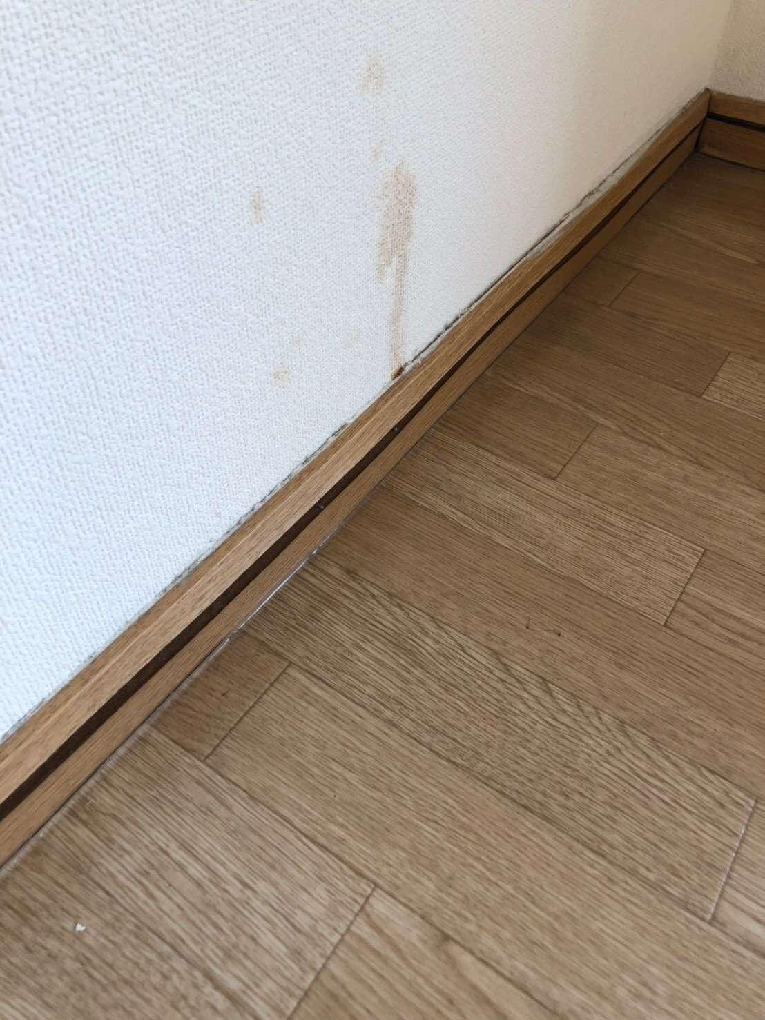 静岡市 木巾木 壁紙 内装工事 クロス張替え 内装工事 クリーニング