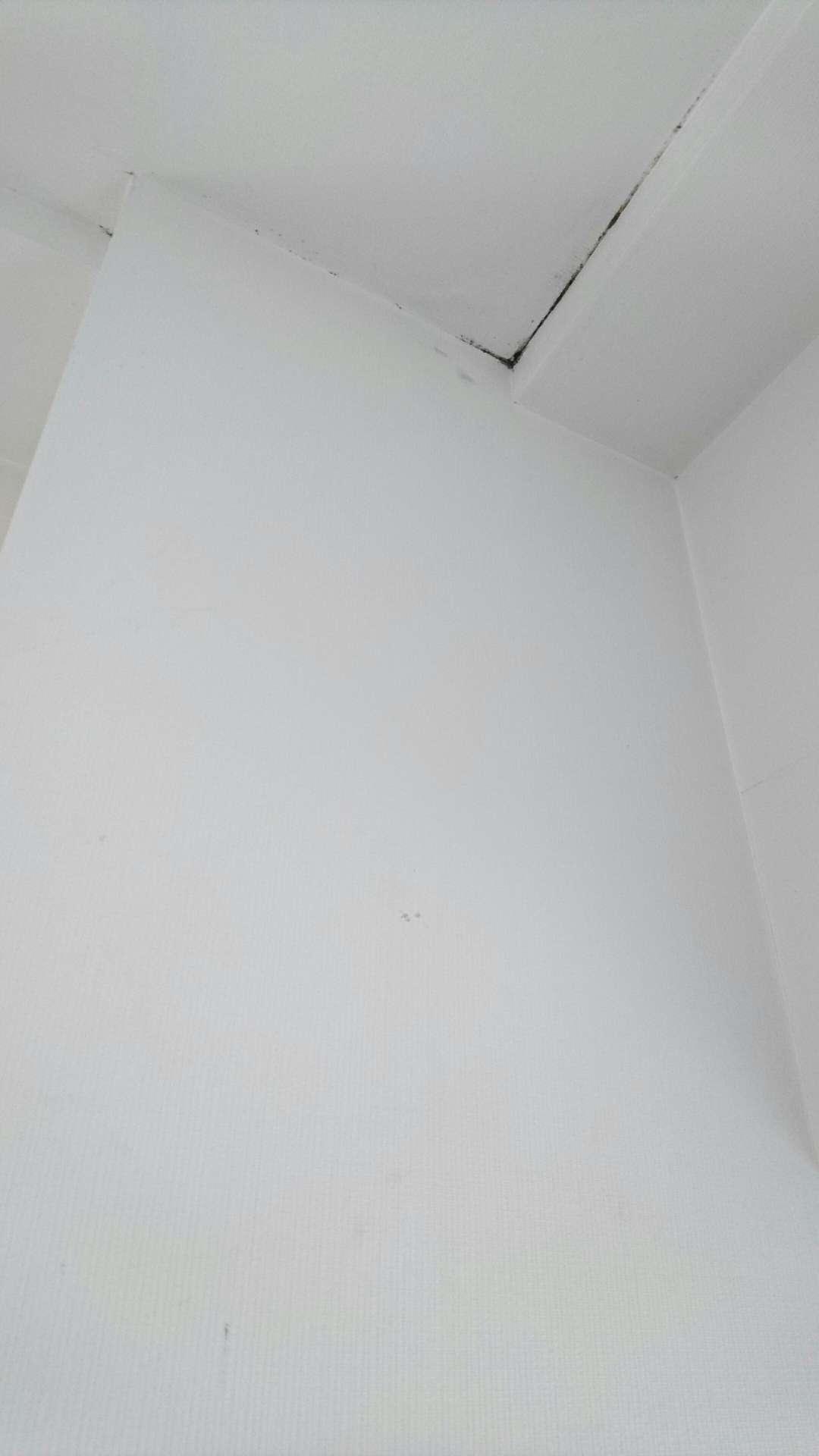 壁紙にカビが生えた時の掃除方法 大阪市の大規模改修工事 外壁屋根