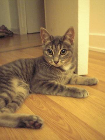 うちの美人猫