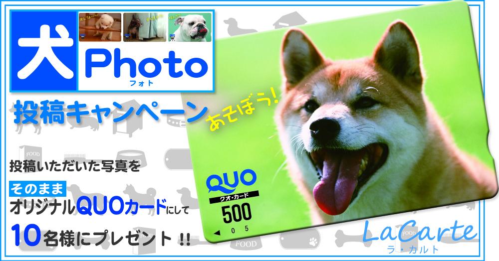 投稿した写真をそのままQUOカードにして10名様にプレゼント!かわいい犬photo投稿キャンペーン!!