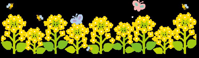 フリー素材_菜の花