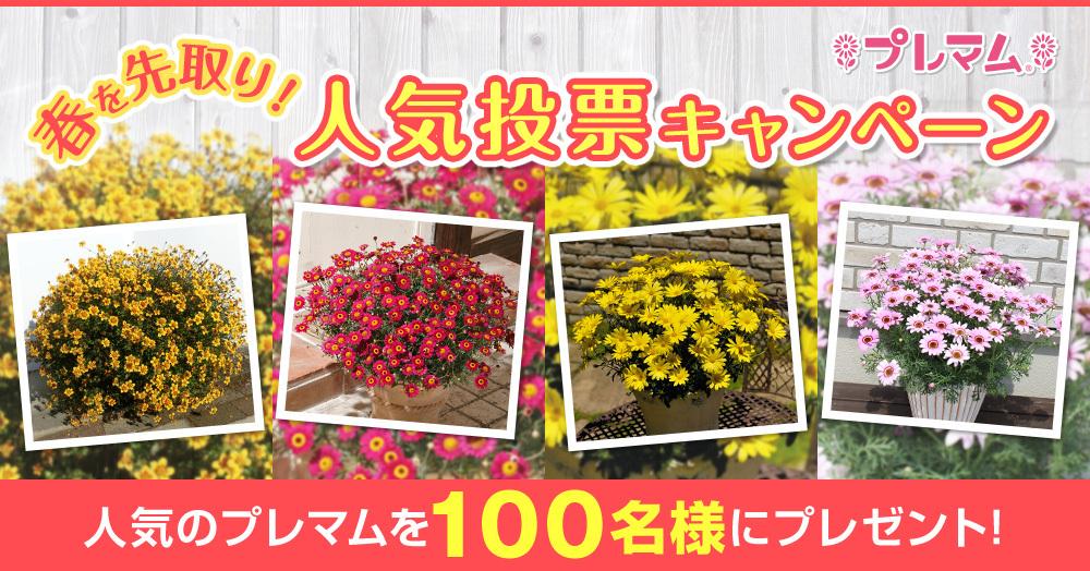 春を先取り♪人気投票でプレマムシリーズ抽選で100名様にプレゼント!