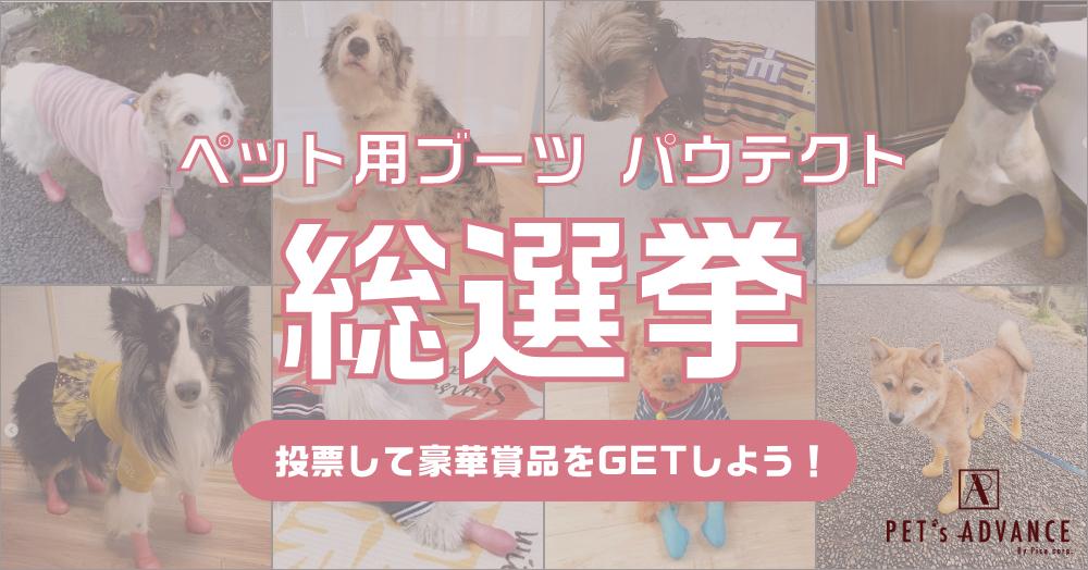 犬用オールシーズンブーツ「パウテクト」を履いたワンちゃん総選挙!お気に入りのワンちゃんに投票しよう♪