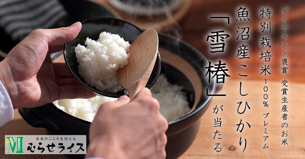特別栽培米 魚沼産こしひかり「雪椿」2kgが10名様に当たる!