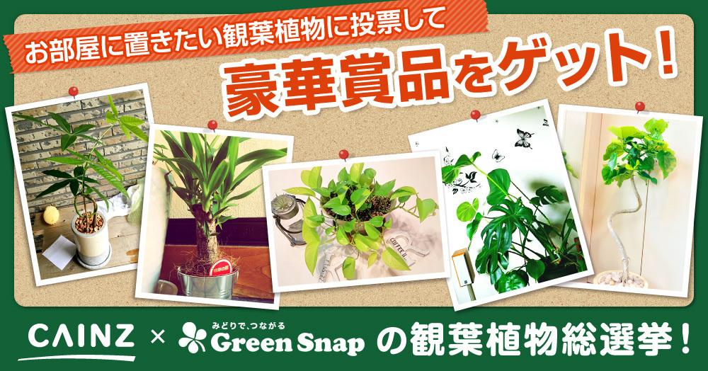お部屋に置きたい観葉植物はどれ?投票して豪華賞品が当たる!CAINZ×GreenSnap観葉植物総選挙キャンペーン!