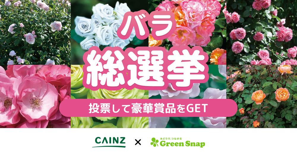 バラ総選挙★自分のお庭で育てたい野菜の総選挙キャンペーン!CAINZ×GreenSnap