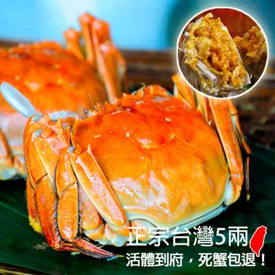 正宗台灣鮮活大閘蟹5兩 (5.9折)