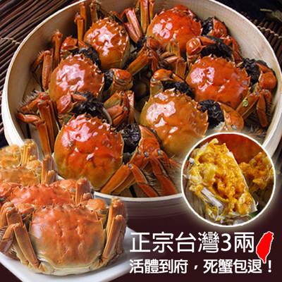正宗台灣鮮活大閘蟹3兩 (3.8折)