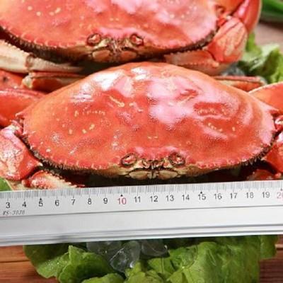 北美黃金蟹(600-800g) (6.3折)