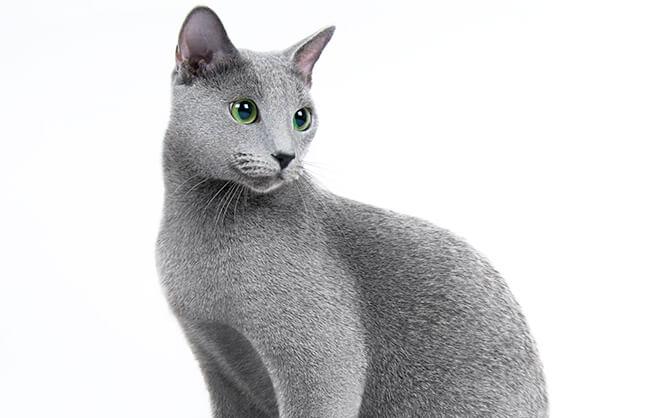 ペット レタッチ 猫