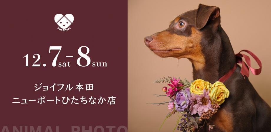 ペット ジョイフル 本田
