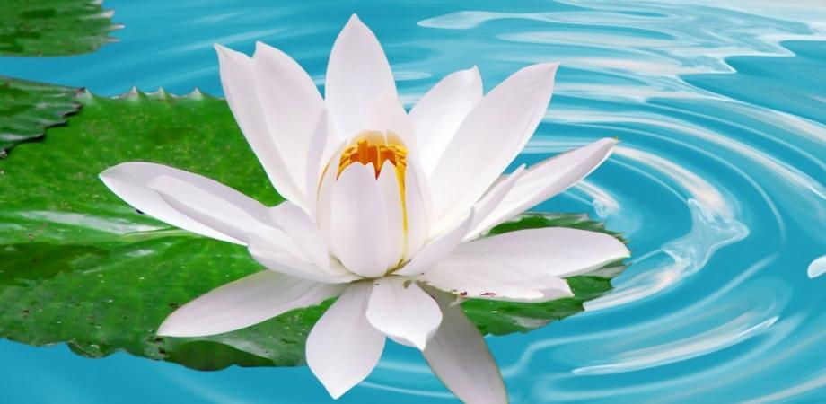 introductory free reiki talk healing meditation peatix