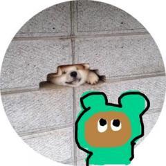 kuma__sama