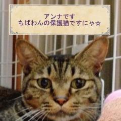 ne_ko_ga_su_ki