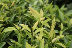 第15回全国地紅茶サミットin奈良「ならではの紅茶&香茶」
