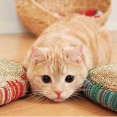 kitty324a