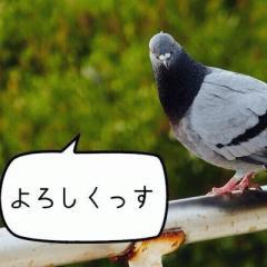 kinaco_sub