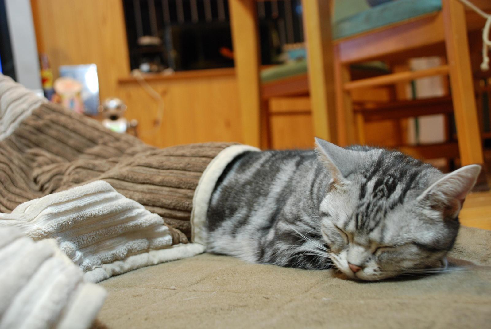 寒さが苦手なネコちゃんたちに♡ 可愛いあったか暖房グッズをご紹介!