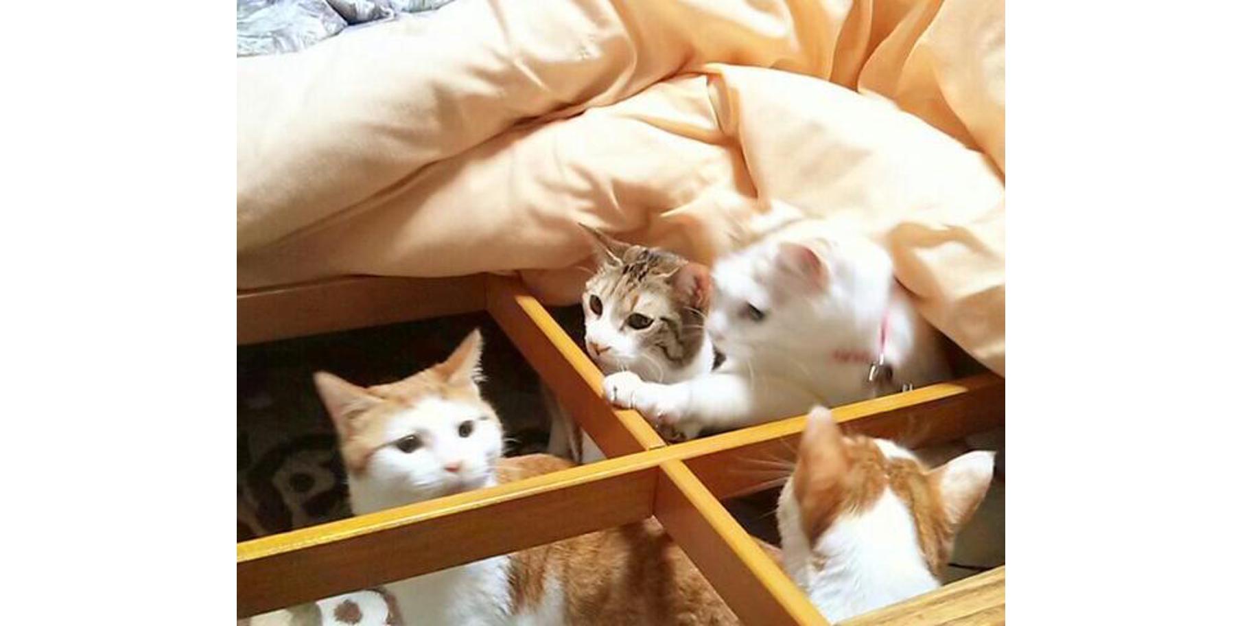 もう春だよ! 突然のコタツ撤去に対する、猫たちの反応が可愛かった