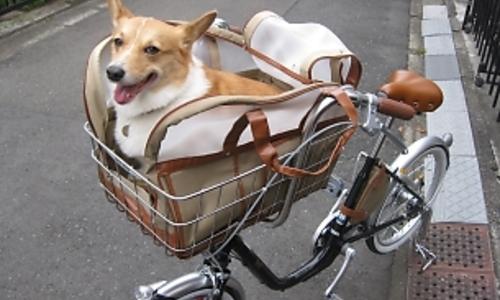 犬を自転車に乗せて ...