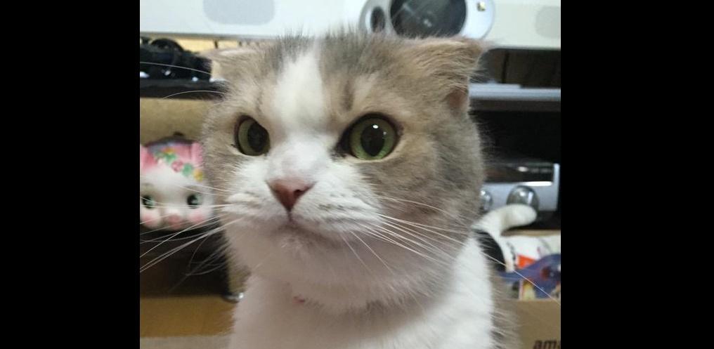 いつものゴハンがない。 ネコちゃん、怒りがエスカレートして…4枚