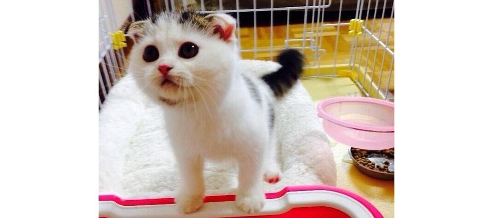 【まさかのブスカワ!?】とっても可愛いネコちゃんが信じられない姿に…( ゚Д゚) 5枚