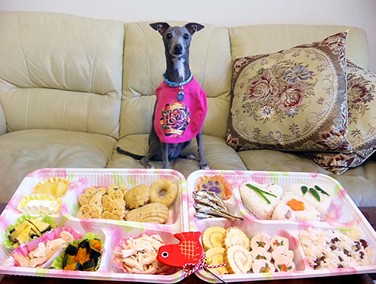 愛犬用おせちでお正月を楽しもう!おせちの手作り方法もご紹介します♪