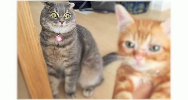 まんまる顔のネコさん、新入り子猫に超ショック!!→ そして、数か月後…♪(画像3枚)