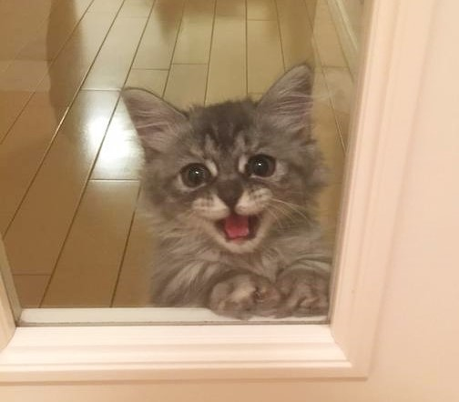 飼い主さんの出かけ際… ネコちゃんがとった行動に、心がぎゅーっとなります( p_q)♡