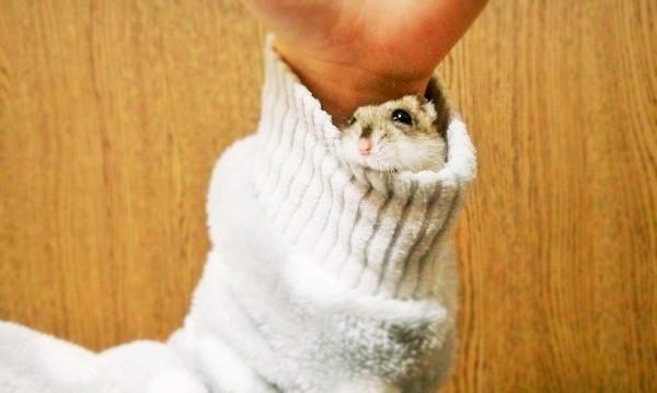 """お袖に入ったハムスターさん♪ リラックスしすぎて、 """"とろけ顔""""に…♡ (画像3枚)"""