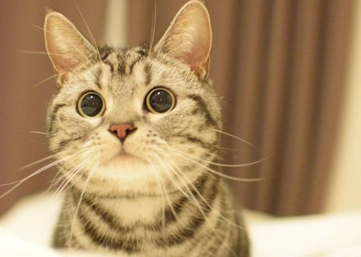 """【ネコ缶じゃないよ】""""ツナ缶""""をエサだと思った猫。期待にあふれる視線が、かわいい…♡ (2枚)"""