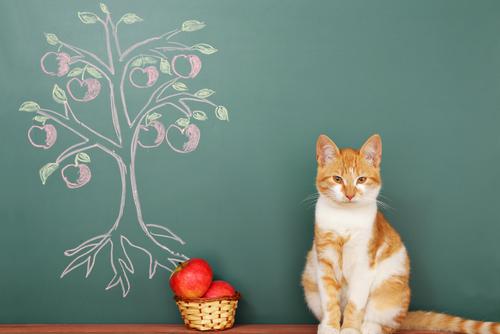 猫ちゃんと幸せに暮らすには? 暮らし方を考えるセミナーが開催