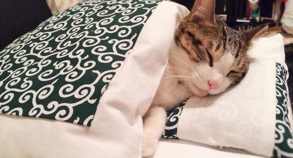 2/10布団の日♪ お布団の素晴らしさを知り尽くした、ニャンコの寝顔をあつめました(ღˇ◡ˇ)♡3枚