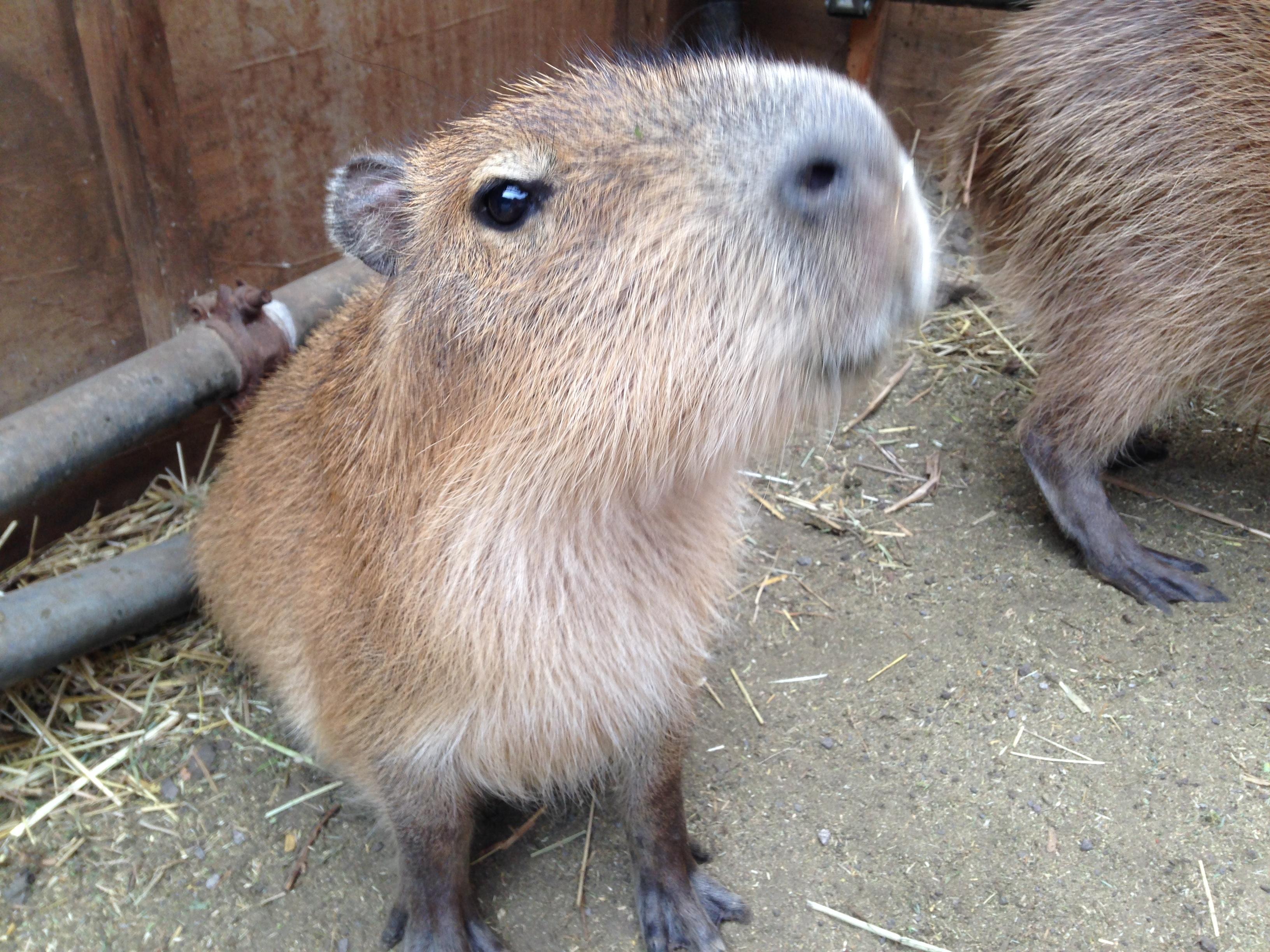 伊豆 愛犬と一緒に楽しめる動物園 アニマルキングダム に行ってみた