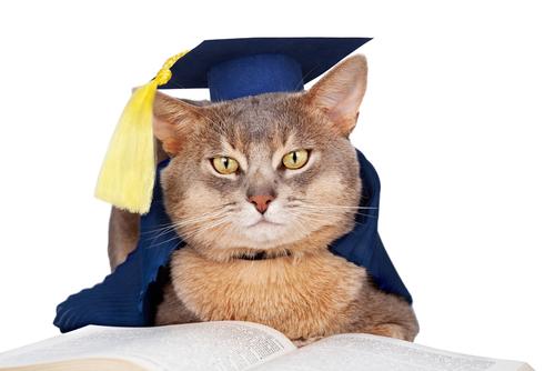 2/25 ネコの大学!? 猫を知り尽くすためのイベントが開催