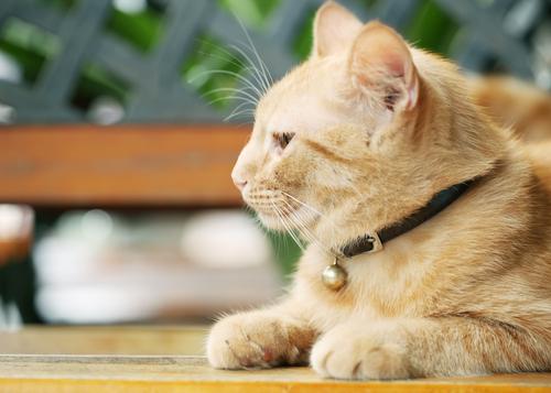 猫のノミアレルギー性皮膚炎|症状・原因・治療法まで|病気
