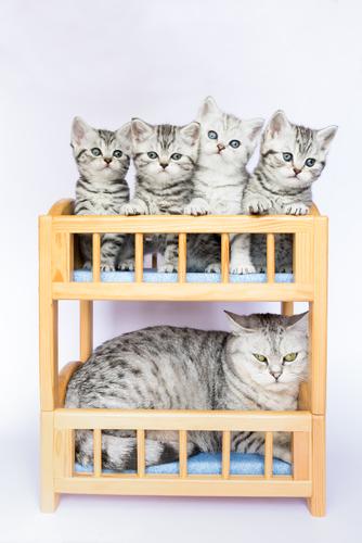 【犬猫】ペット禁止の賃貸で、内緒で飼っている人達の本音