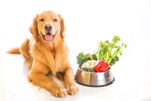 食べ物特集! 犬が食べてもいい野菜、果物について
