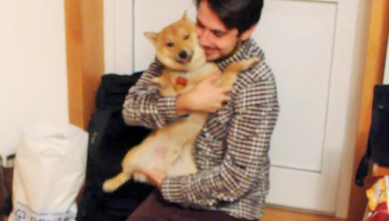 【こんなお家に帰りたい♪】 パパをお迎えする柴犬の、喜び方が尋常じゃない!!